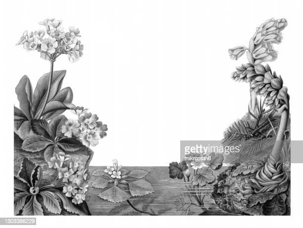 old lithograph of botany, spring vegetation - lithograph stock pictures, royalty-free photos & images