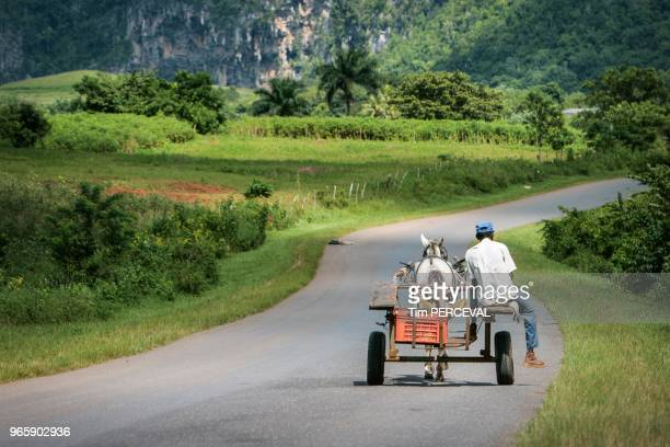 Old man and horse Vinales