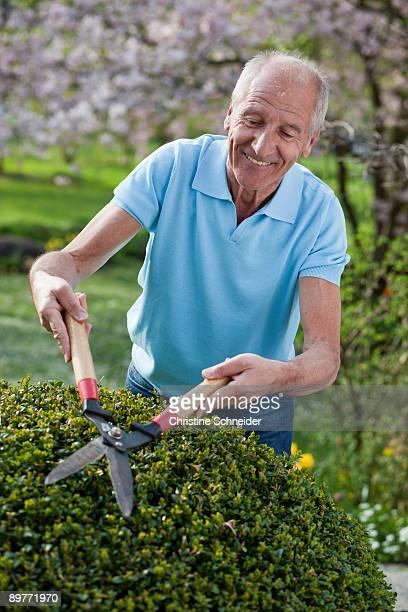old man cutting hedge