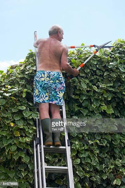 old man gardening on ladder - jardinier humour photos et images de collection