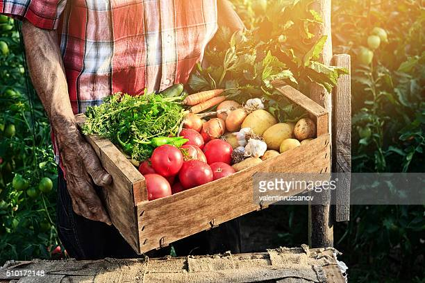 old man holding wooden crate filled with fresh vegetables - basket stock photos and pictures