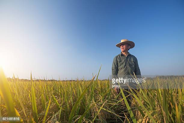 old man standing in the ripe rice in autumn