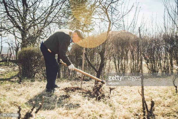 Old man tending orchard