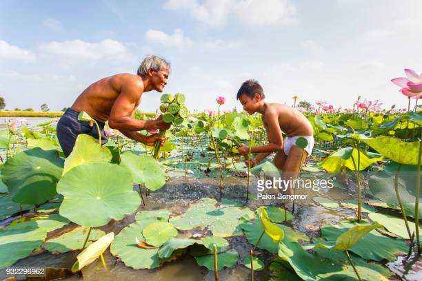 old man thai farmer and grandchild grow lotus in the season. they were soaked with water and mud to be prepared for harvest to sell with blue sky background - pianta acquatica foto e immagini stock