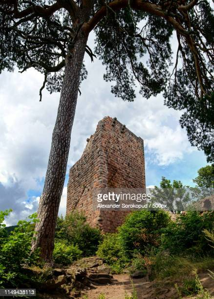 old medieval fortress ruins of chateau landsberg in deep forest - landsberg am lech stock pictures, royalty-free photos & images