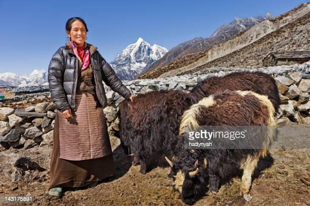 velha mulher hearding yaks nepalêsname - asian ox imagens e fotografias de stock