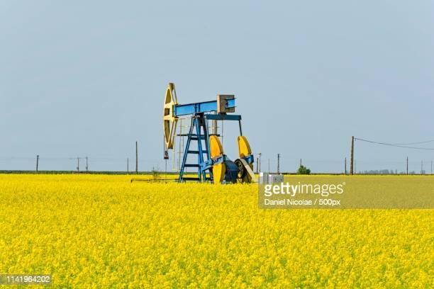 Old Oil Pump Jack In Canola Rapeseed Field
