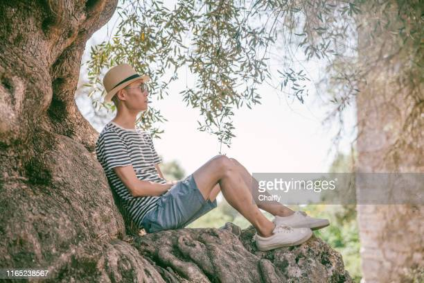 old olive tree in greece - kalamata olive stock pictures, royalty-free photos & images
