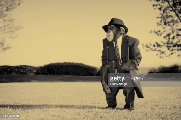 old photographer - ape stock pictures, royalty-free photos & images