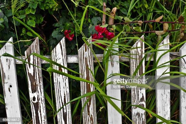 Old Picket Fence, Dunmore Town, Harbour Island, Bahamas