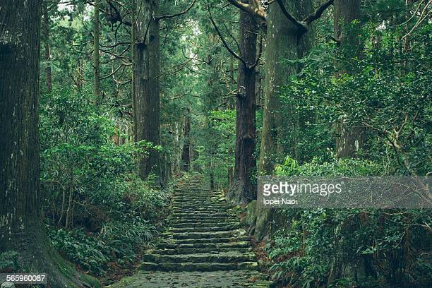 Old pilgrimage trail in forest, Kumano Kodo, Japan