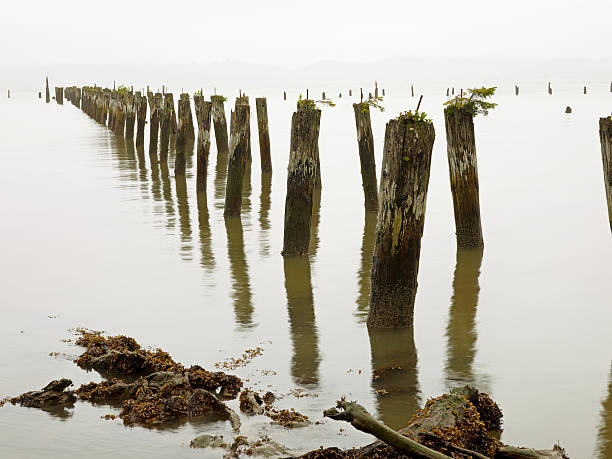 Old pilings standing upright in the shallow water on the beach in Astoria, Oregon, USA