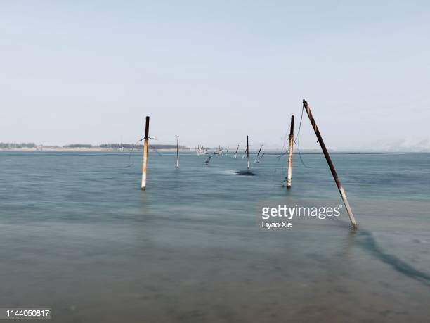 old poles in the water - liyao xie stock-fotos und bilder