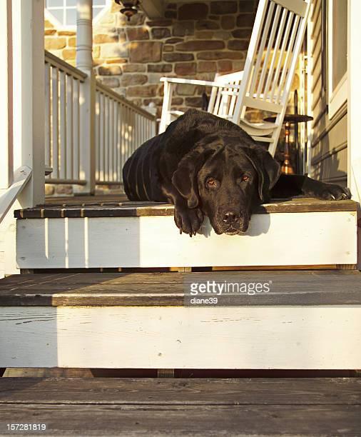 old porch dog