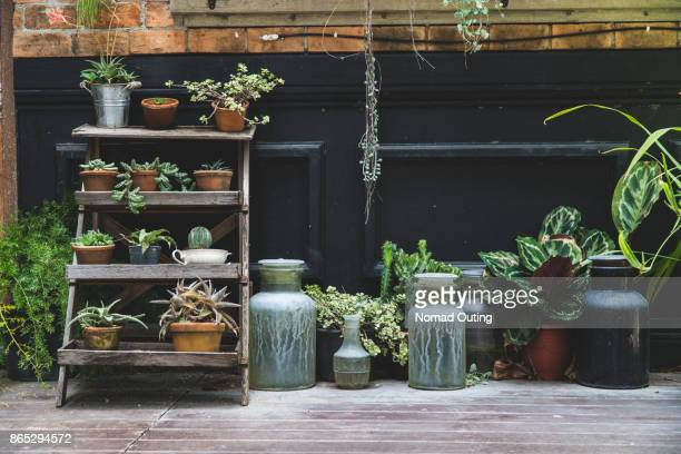 old pottery in garden,gardening decoration element,green plant on pottery in houseplant - pot plant stock pictures, royalty-free photos & images