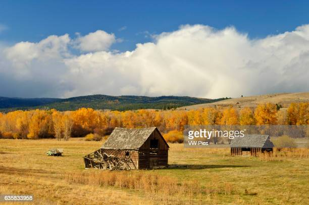 Old ranch buildings and cottonwood trees in autumn color North Powder River Road the Elkhorn Scenic Byway in Baker County eastern Oregon