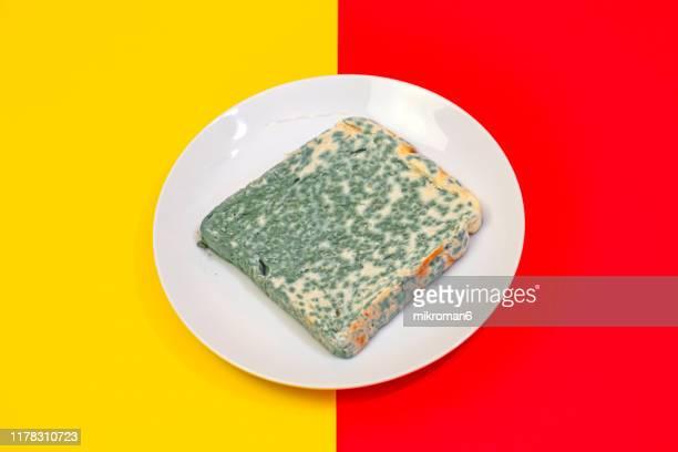 old rotting moldy food. moldy toast bread - death of a rotten fotografías e imágenes de stock