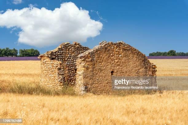 old ruin in a yellow wheat field near lavender, valensole plateau, southern france - francesco riccardo iacomino france foto e immagini stock