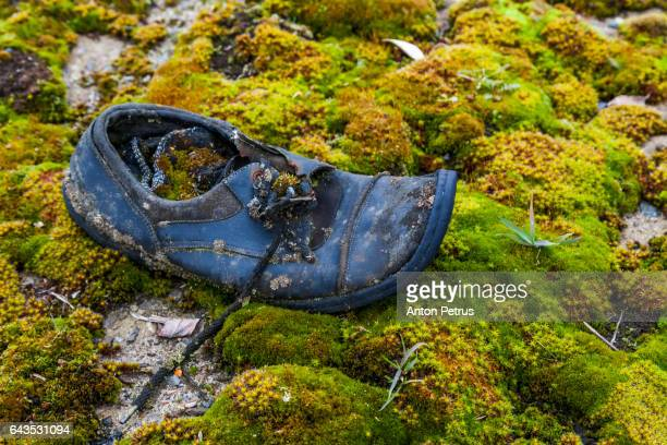 Old shoe covered with moss. Chernobyl zone, Pripyat, Ukraine