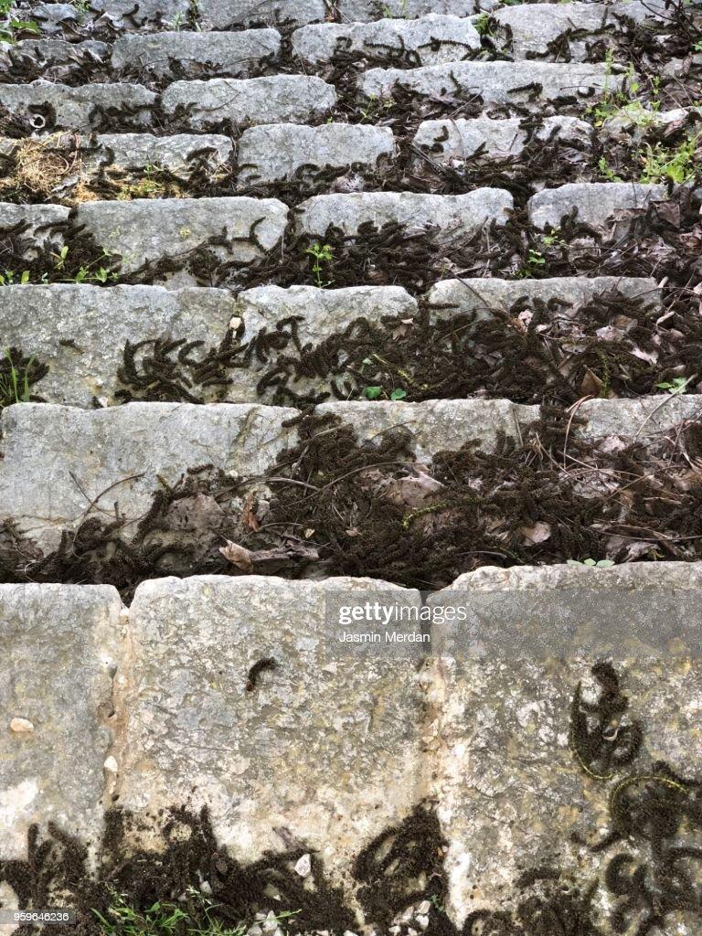 Old stone stairs : Stockfoto