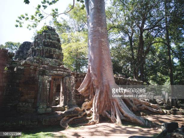 old temple amidst trees - bortes stock pictures, royalty-free photos & images