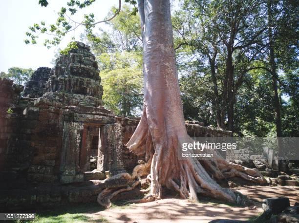 old temple amidst trees - bortes foto e immagini stock