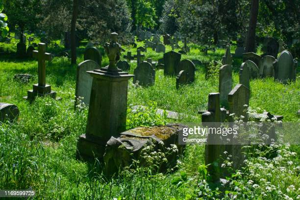 old tombstones in brompton cemetery in london - gwengoat stock pictures, royalty-free photos & images