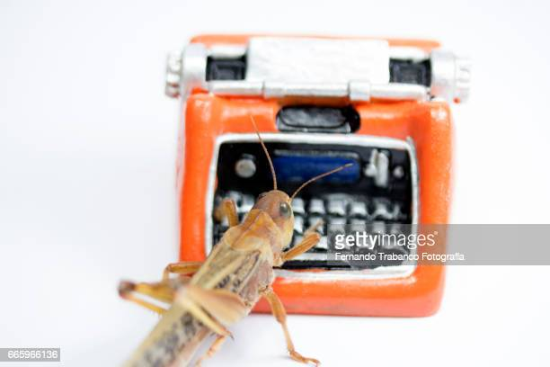 Old toy typewriter and animal insect writer