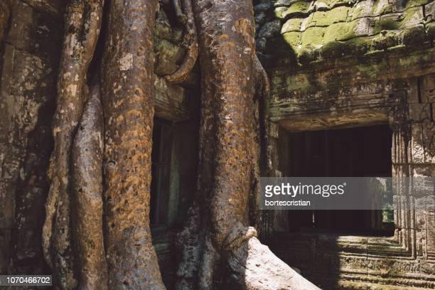 old tree by building - bortes - fotografias e filmes do acervo