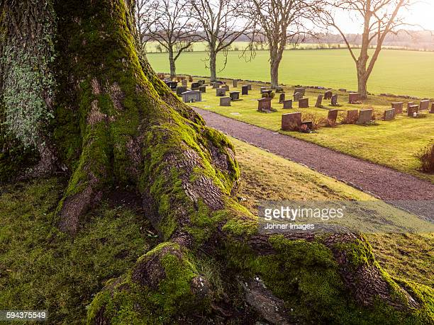 Old tree, graveyard on background