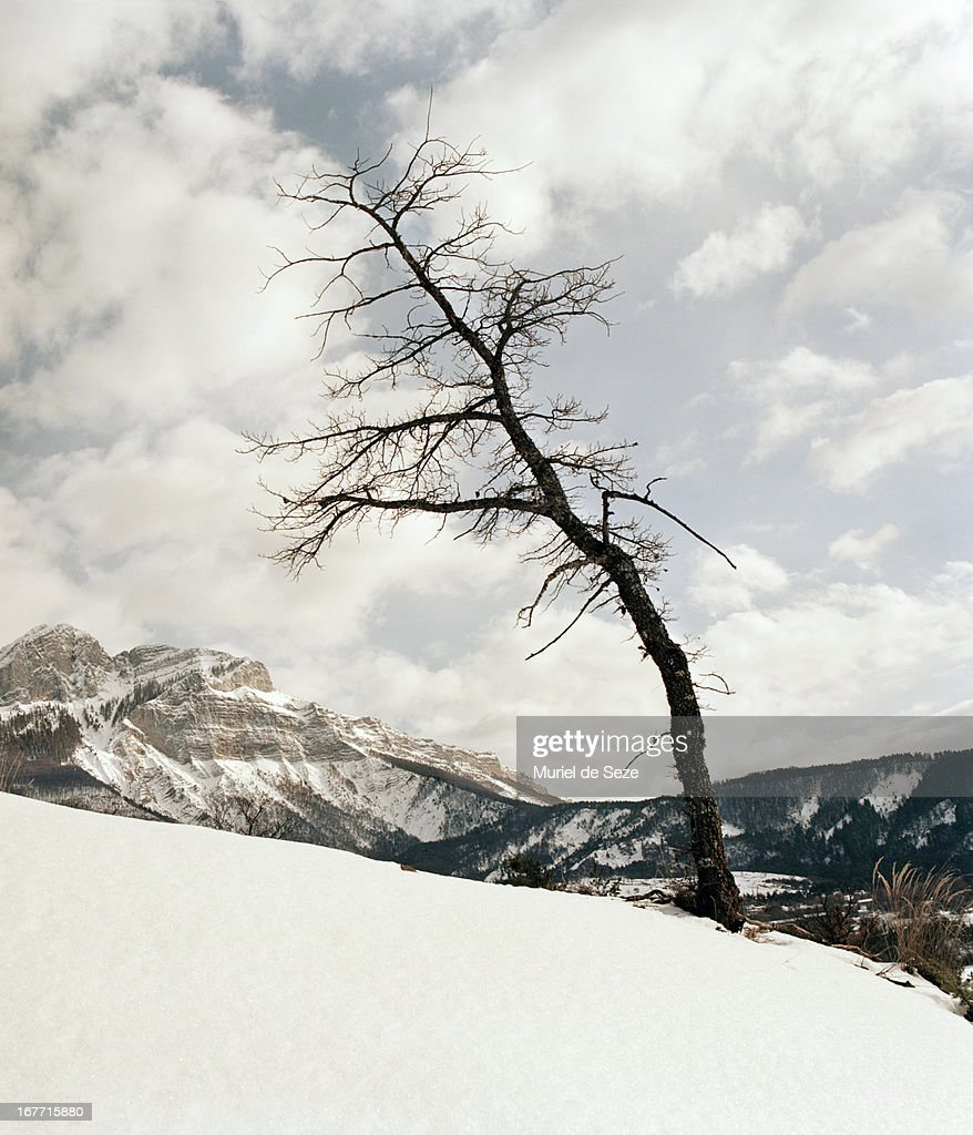 Old tree in snowy landscape : Stock Photo