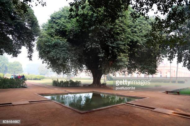 velha árvore perto da lagoa - lugar histórico - fotografias e filmes do acervo