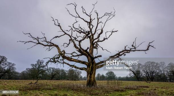 old tree - dead stock pictures, royalty-free photos & images