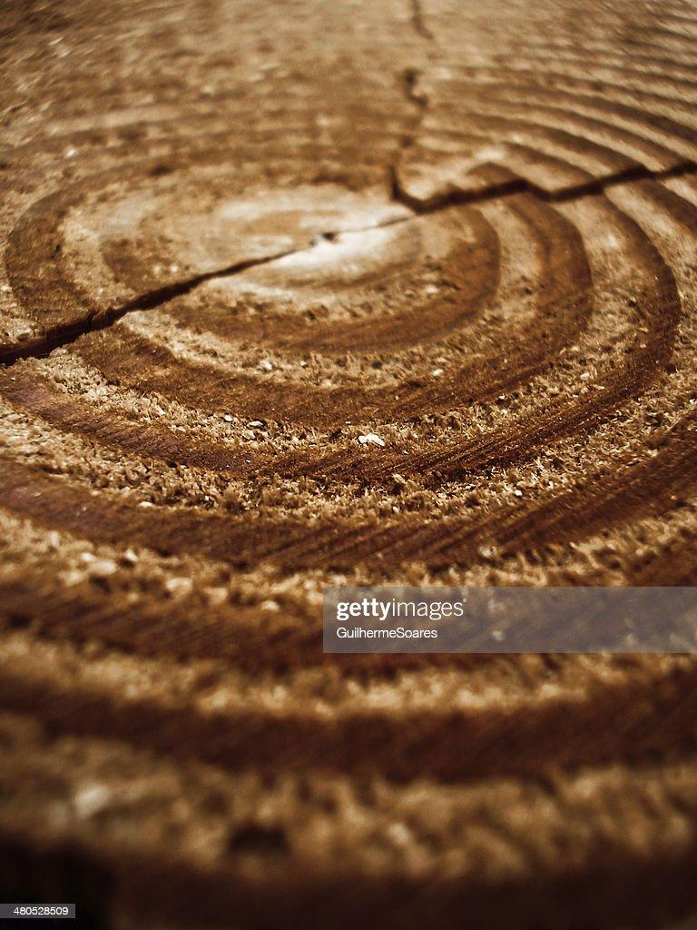 Alter Baum Ringe gebrochen in der Mitte : Stock-Foto