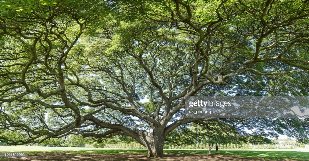 Old tree with beautiful branch : Stock Photo