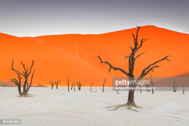 Old Trees of the Deadvlei Clay Pan, Namib-Naukluft National Park, Namibia