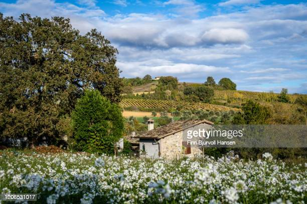 old typical stone house in field of flowers in pomonte winery landscape - finn bjurvoll stock pictures, royalty-free photos & images