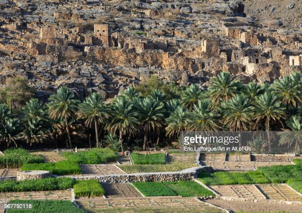 Old village in an oasis in front of the mountain Ad Dakhiliyah Region Riwaygh Oman on May 10 2018 in Riwaygh Oman