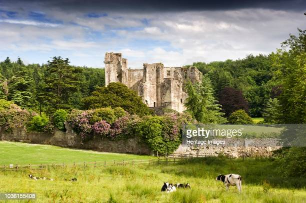 Old Wardour Castle, Wiltshire, 2009. General view with cows in the foreground. Built in the late 14th century by John Lord Lovel, and updated by the...