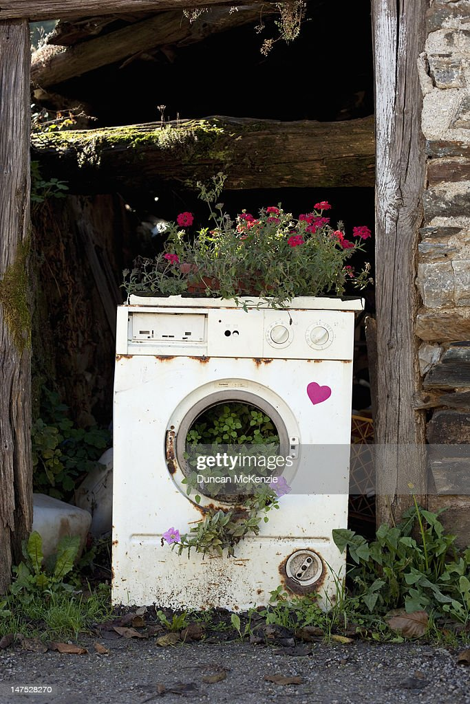 Old washing machine planted with flowers : Stock Photo