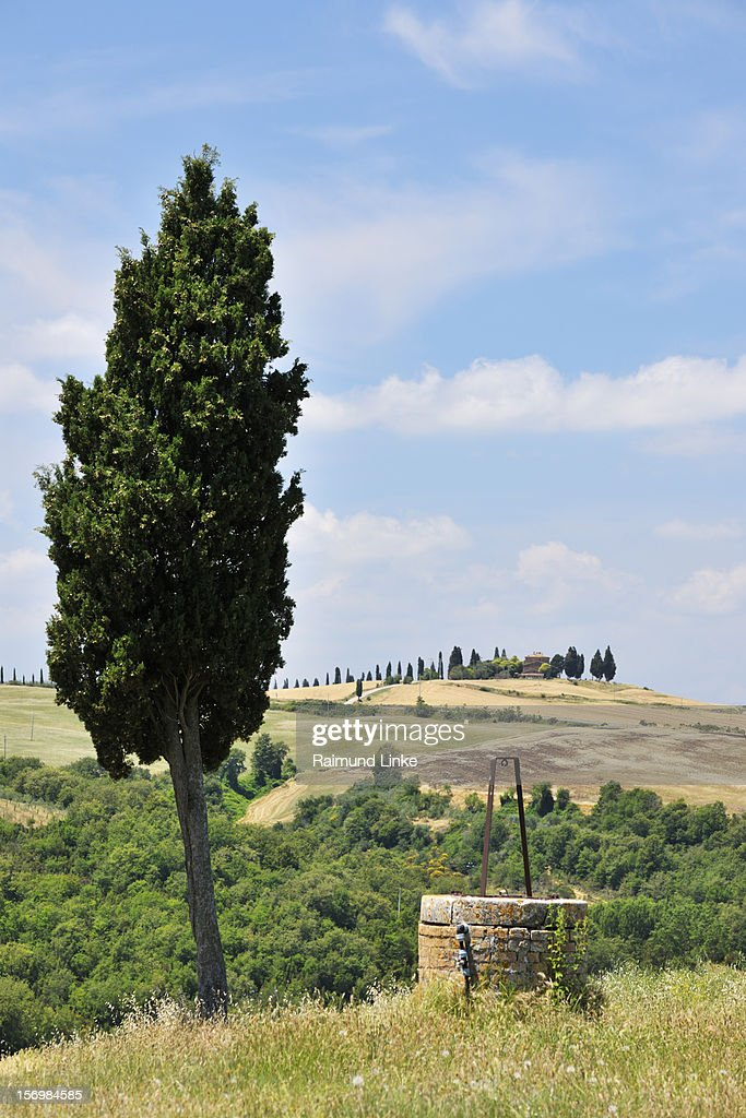 Old Well with Cypress Tree : Stock Photo