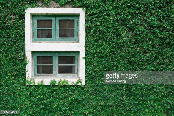 old window with green plant background