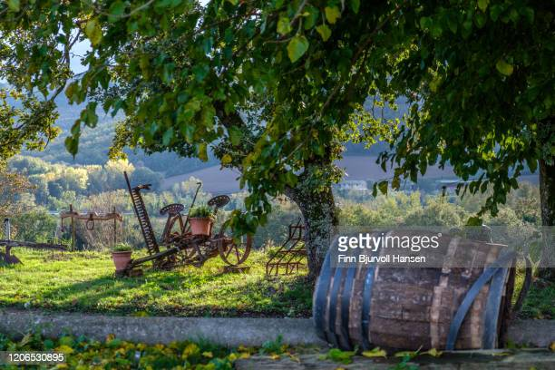 old wine barrel in a garden in pomonte - finn bjurvoll photos et images de collection