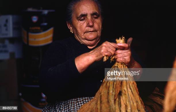 Old woman drying tobacco