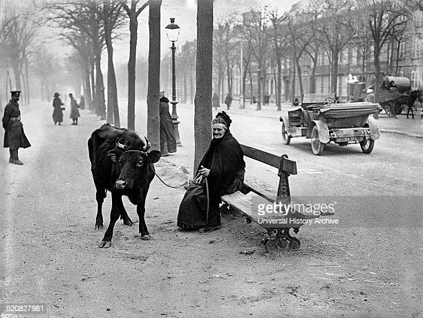 Old woman with a cow sits on a bench She was forced to flee the warzone Taken during the First World War in Amiens France 1918