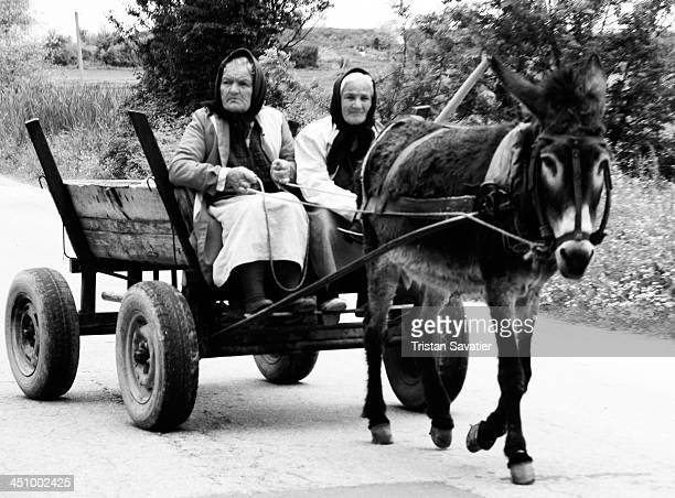 Old women driving a donkey cart on the road . This is still a typical sight in rural regions of Bulgaria. Other keywords: Rural scene, road,...