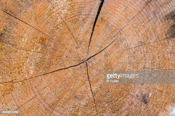 old wood log texture background - cross processed stock pictures, royalty-free photos & images