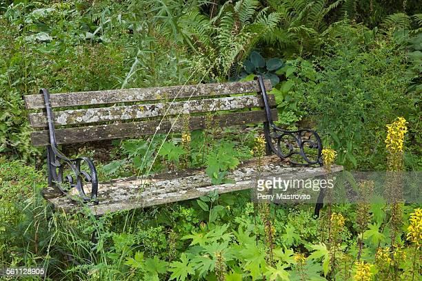 Old wooden bench in overgrown garden
