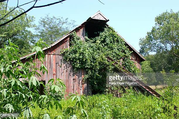 Old Wooden House Amidst Trees In Forest