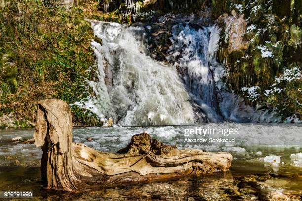 Old wooden timber in the water of mountain waterfall, Germany